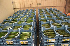 Courgettes Kas - Supers