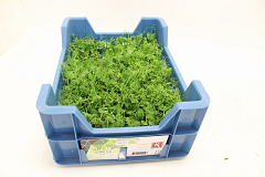 Koppert Affilla® Cress