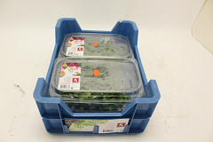 Koppert Salad Pea®