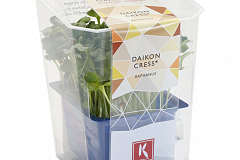 Koppert Daikon Cress Single