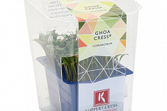 Koppert Ghoa Cress Single