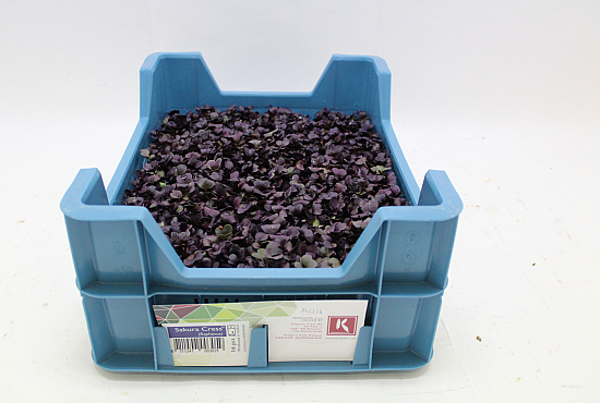Koppert Sakura Cress®