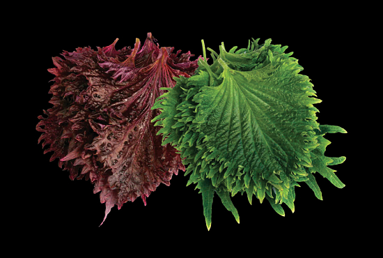 Koppert Shiso® Leaves Mix